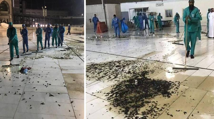 اجتياح حشرات لساحات الحرم المكي والسلطات السعودية توضح