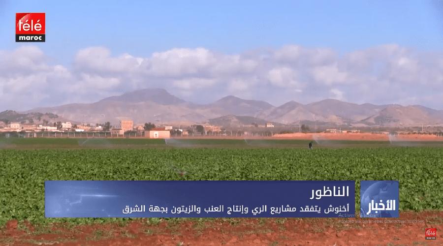 أخنوش  يتفقد مشاريع الري و انتاج العنب و الزيتون  بجهة الشرق