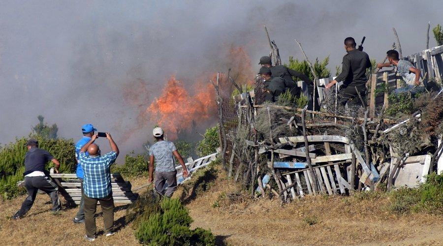 النيران تأتي على 600 هكتار من غابة الملاليين بالمضيق