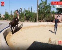 خيول في رحلة جديدة للتعرف على فن الفروسية العصرية و المهن و التخصصات المرتبطة بها.