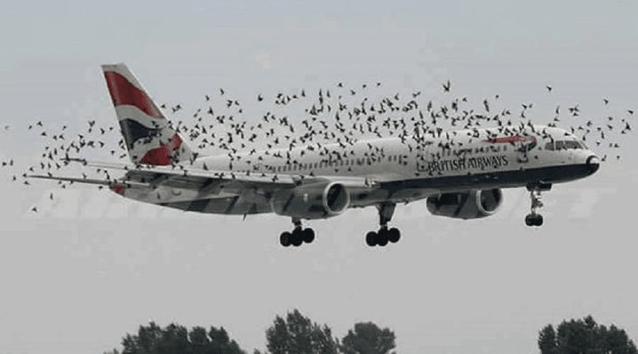 ربان ينجح في الهبوط بطائرة فوق حقل للذرة بعد هجوم سرب لطيور النورس على محركاتها