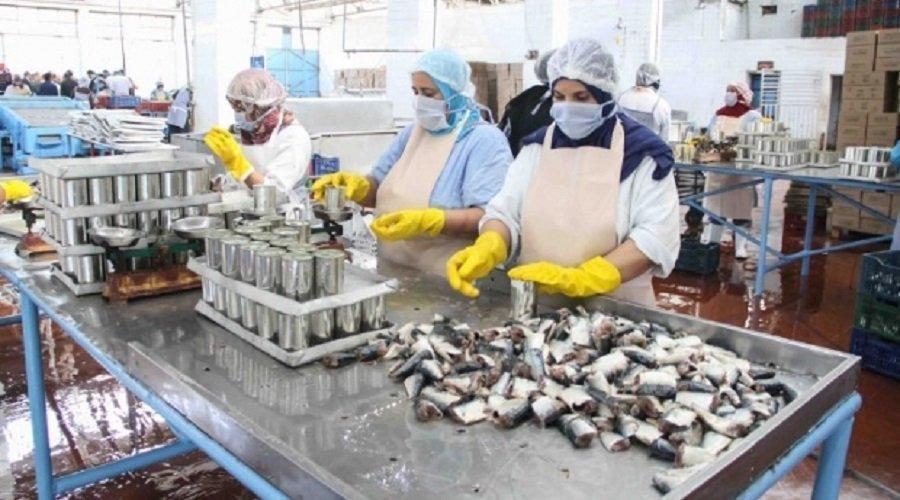 صناعة تعليب السمك إحدى الأنشطة الأكثر تقيدا بالمتطلبات الصحية