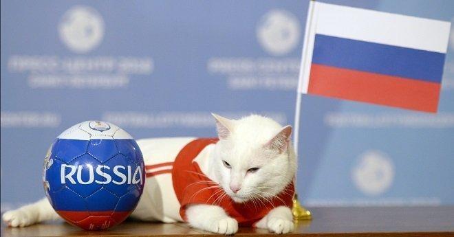 """بالفيديو.. القط """"أخيل"""" يتنبأ بنتيجة المباراة الافتتاحية بين السعودية وروسيا"""