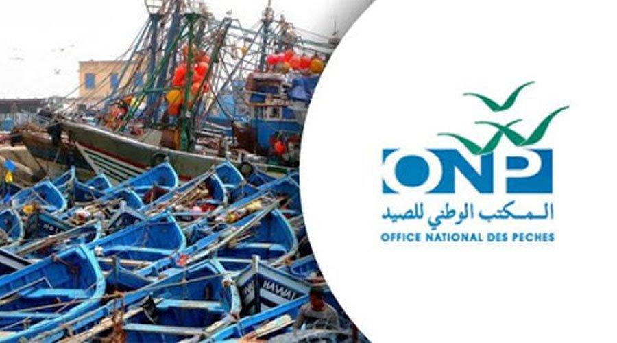 المكتب الوطني للصيد يواصل تحسين وعصرنة عملية التسويق