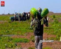 مساحة ضوء : ما علاقة تنامي ضيعات زراعة الدلاح بمشكل الماء بإقليم زاكورة ؟
