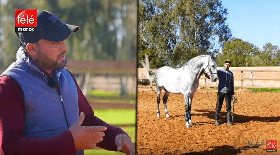 خيول: تقنيات وتداريب متنوعة ستساعدكم على العناية الصحيحة بالخيل وتطوير علاقتكم بها