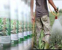 مساحة ضوء : المبيدات الزراعية سم يترصد أرواح الناس