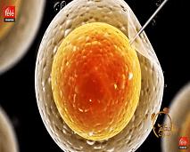 هذه أحدث تقنيات المساعدة على الإنجاب