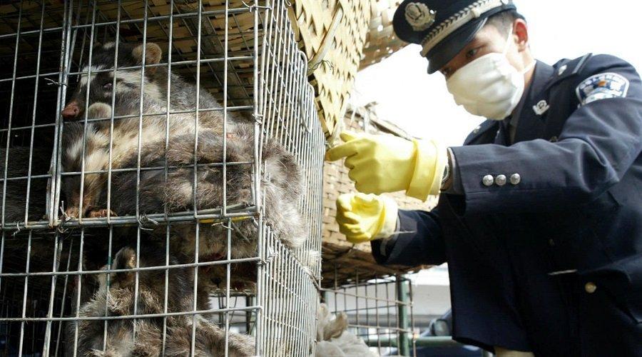 الصين تفرض حظرا كاملا على الاتجار بالحيوانات البرية واستهلاكها بووهان