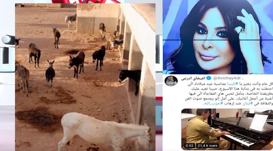 العالم الآن: إليسا ترد على تهنئة الإسرائيلي أفيخاي أدرعي وملجأ بالمغرب للاهتمام بالحمير