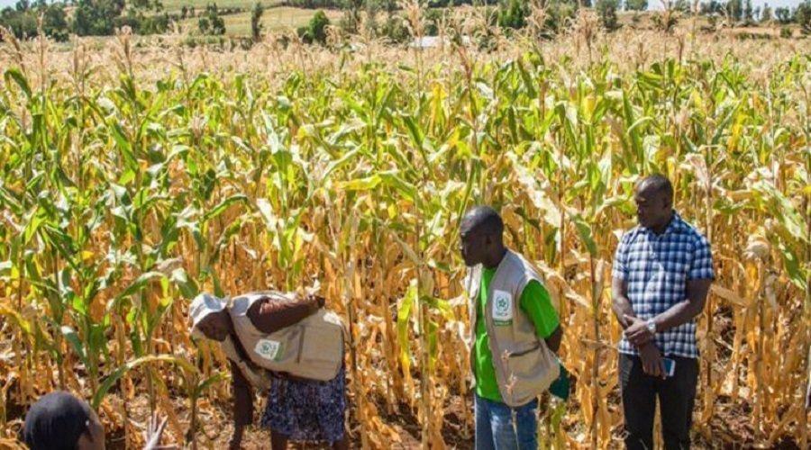 الفوسفاط والبنك الأفريقي للتنمية يخصصان 4 ملايين دولار للولوج الى الأسمدة بكوت ديفوار وغانا