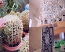 نبتة الصبار, منزل المهندسة صوفيا السبتي و تقنيات الرسم والنقش على الزجاج في فن  و ابداع
