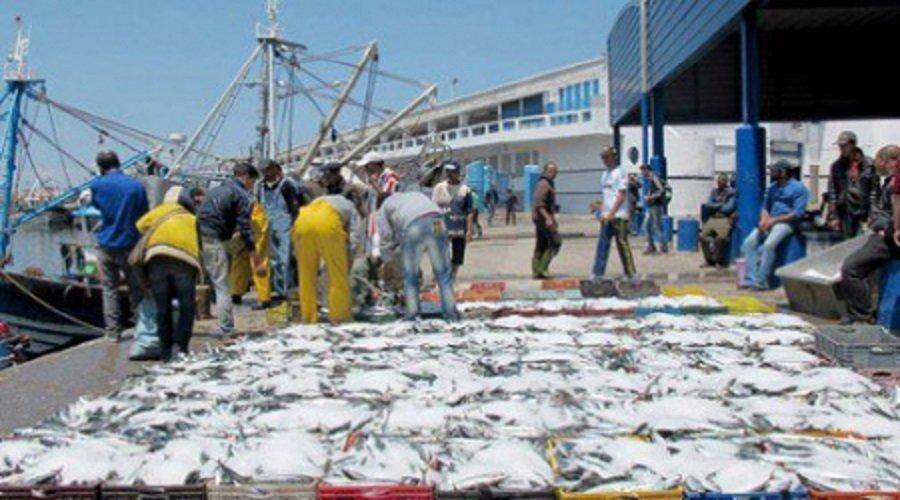 وزارة الفلاحة تؤكد مواصلة الأنشطة الموجّهة للتصدير في ظل تدابير صارمة