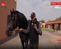 """من المربط الوطني ببوزنيقة برنامج """"خيول"""" سيعرفنا على أحدث التقنيات والاستعمالات المختلفة للفرس"""