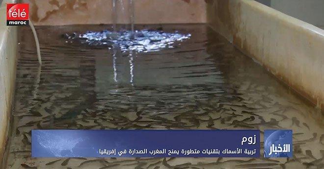 تربية الأسماك بتقنيات متطورة يمنح المغرب الصدارة في إفريقيا