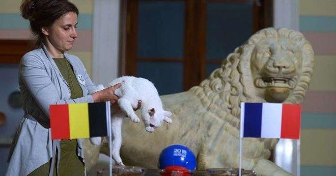 بالفيديو..القط أخيل يتنبّأ بالفائز في مباراة فرنسا وبلجيكا