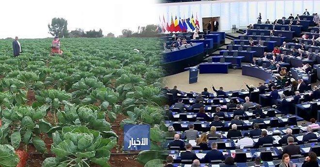 البرلمان الأوروبي .. لجنة الفلاحة تصدق على رأي مؤيد لتجديد الاتفاق الزراعي مع المغرب