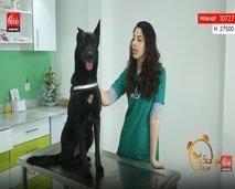 مهارات لتربية الكلاب مع مريم عمراني
