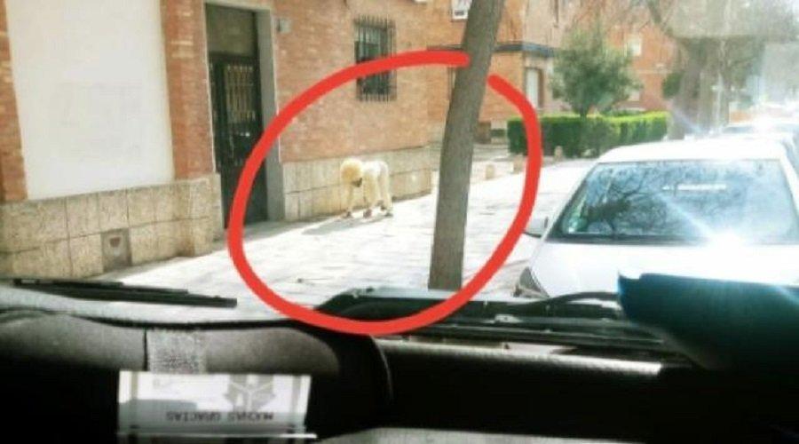 شخص يتنكر في هيأة كلب للتحايل على الحجر الصحي والخروج من البيت
