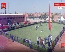 خيول : البطولة الوطنية لتربية الخيول العربية-البربرية.