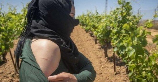 قضية عاملات الفراولة تصل إلى المحكمة الوطنية الإسبانية