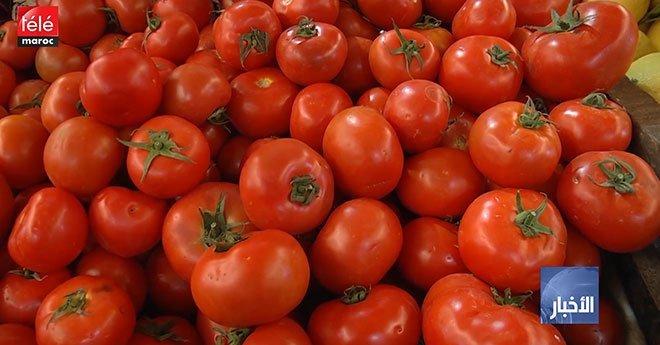 فيديو..الأمم المتحدة: الضيعات المغربية رابع مصدر للطماطم بالعالم