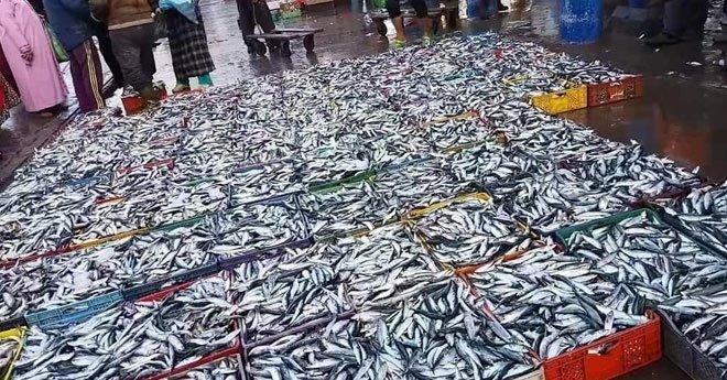 فيديو..الزيادة في أسعار السمك سببها المضاربة ودعوة إلى تحريك آليات المراقبة