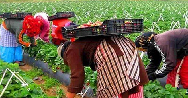 إسبانيا تطلب المزيد من عاملات الفراولة ابتداء من هذا التاريخ
