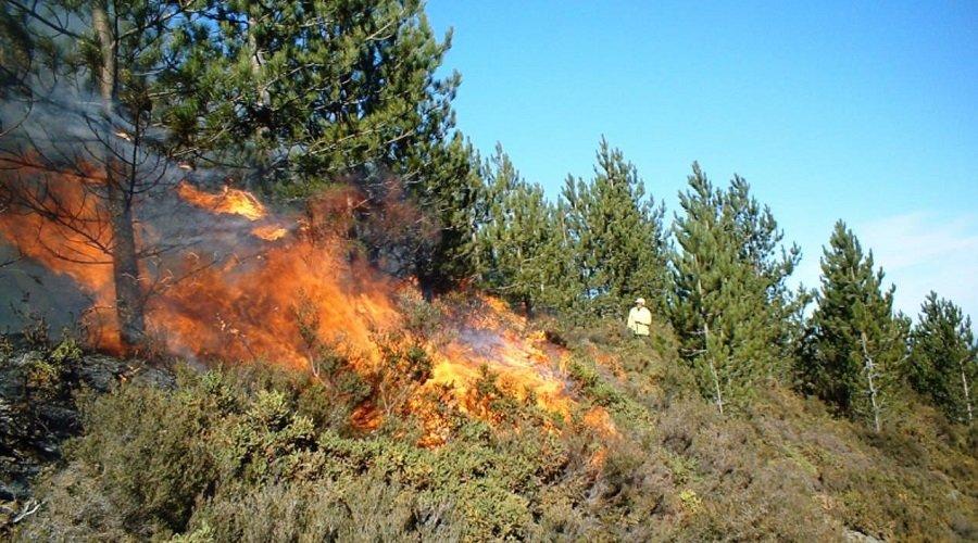 السيطرة على حريق غابة عين لحصن بإقليم تطوان بعد إتلاف 40 هكتارا
