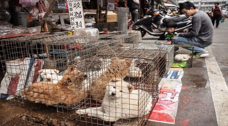 بعد الصين.. انطلاق موسم تناول الكلاب في كوريا الجنوبية