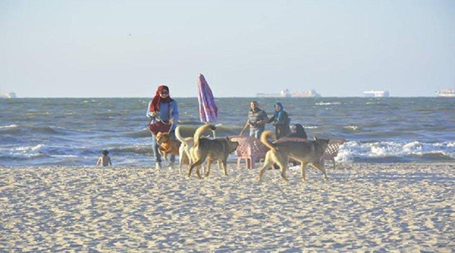 كلاب خطيرة تجتاح الشواطئ وتروع المصطافين وكلب شرس يهاجم دورية للدرك بالهرهورة ويصيب دركيا بجروح خطيرة