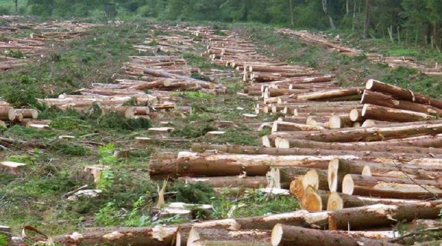 التحقيق في إبادة 60 هكتارا من غابة تابعة لجماعة سلالية بالقنيطرة