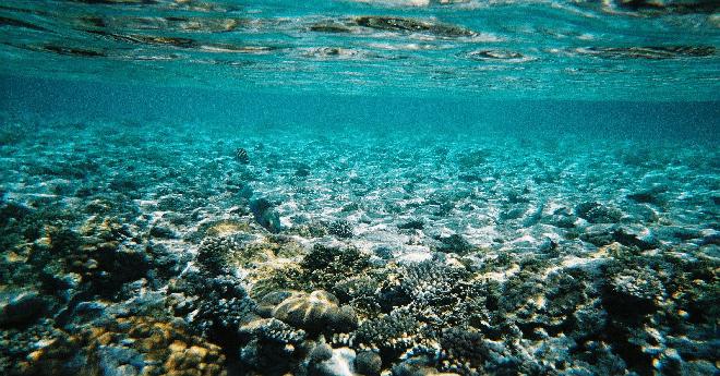 باحثون يكتشفون أنواع بحرية  لم تكن معروفة سابقا