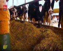 فلاحتنا ثروتنا: تعرفوا على المسار الناجح لتعاونية إنتاج الحليب ومشتقاته بجهة العيون الساقية الحمراء