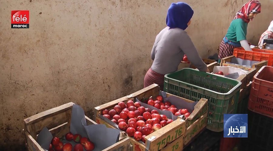 فيديو..عاملات الفراولة : الغرفة الأولى ترفض طلب إيفاد لجنة خاصة بمهمة استطلاعية