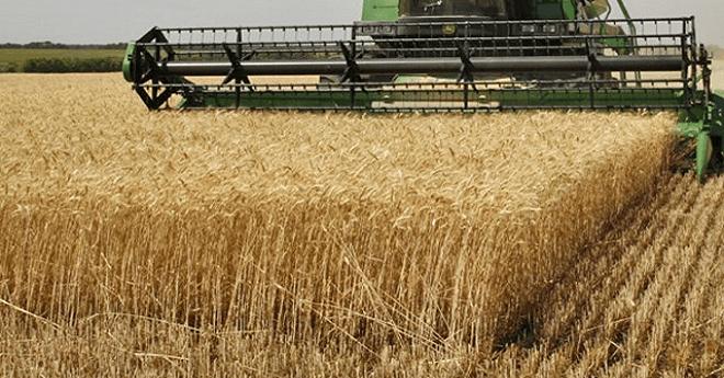 محصول الحبوب يبلغ 103 ملايين قنطار في موسم 2017-2018