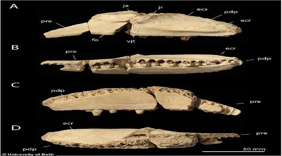 اكتشاف ديناصور بمنقار بط عاش بالمغرب قبل 66 مليون سنة