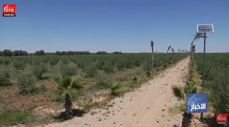 مخطط المغرب الأخضر مكن من تعزيز البنية التحتية للزراعات ومقاومة قساوة المناخ
