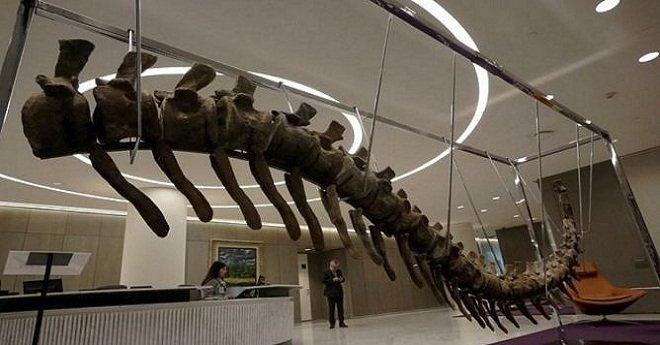"""فتح تحقيق حول طرح """" ذيل ديناصور"""" للبيع في مزاد بالمكسيك تم تهريبه من المغرب"""