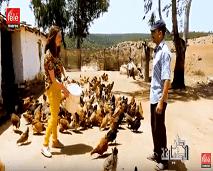 دار الضيافة: اكتشفوا أسرار تربية الجمال والدجاج وفن صناعة القصب بمنطقة سيدي يحيى زعير