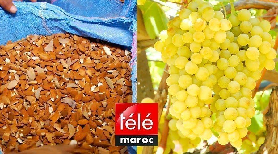 المغرب الأخضر: أسرار زراعة اللوز وكيفية إنتاج الفواكه في ضيعة نموذجية