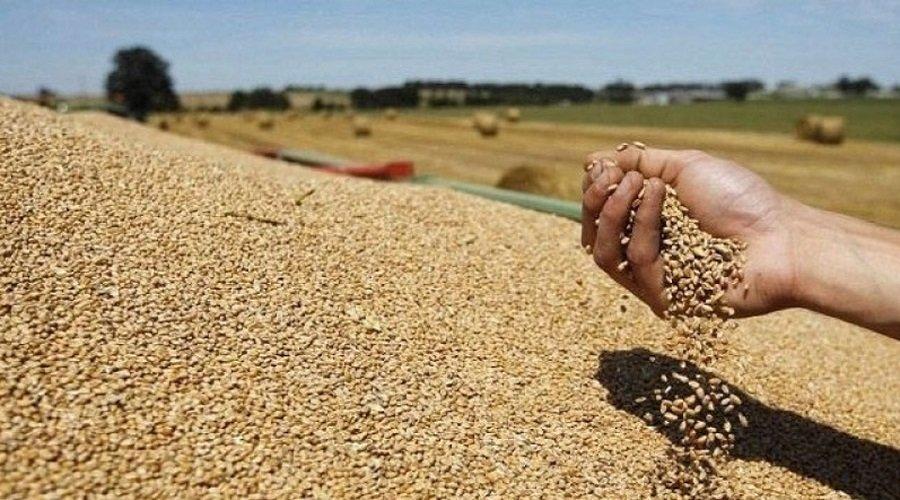 إنتاج المغرب من الحبوب بلغ 32 مليون قنطار