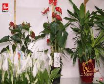 أفضل النباتات التي يمكنك أن تقدمها كهدية