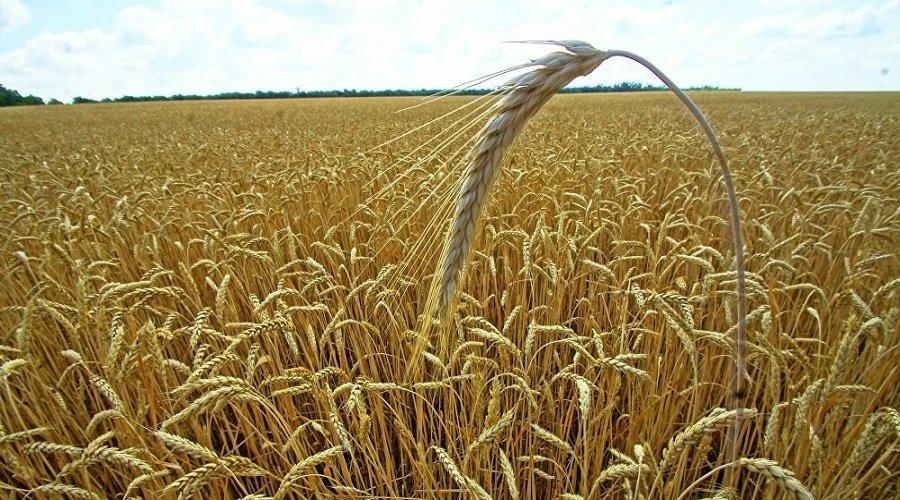 تأمين 1,6 مليون قنطار من البذور استعدادا للموسم الفلاحي الحالي
