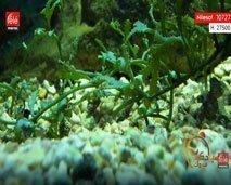 الفوائد الغذائية والعلاجية للطحالب
