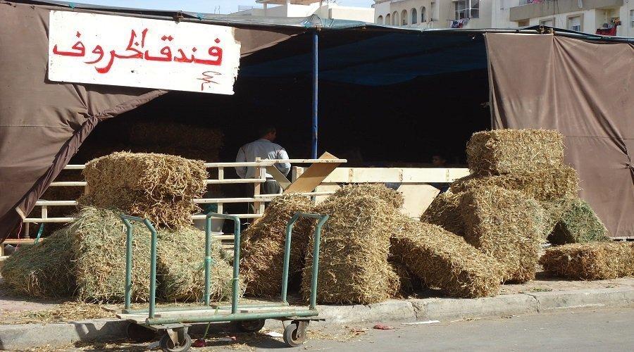 اقتصاد عيد الأضحى... أكثر من 8 ملايير درهم تضخ نحو العالم القروي