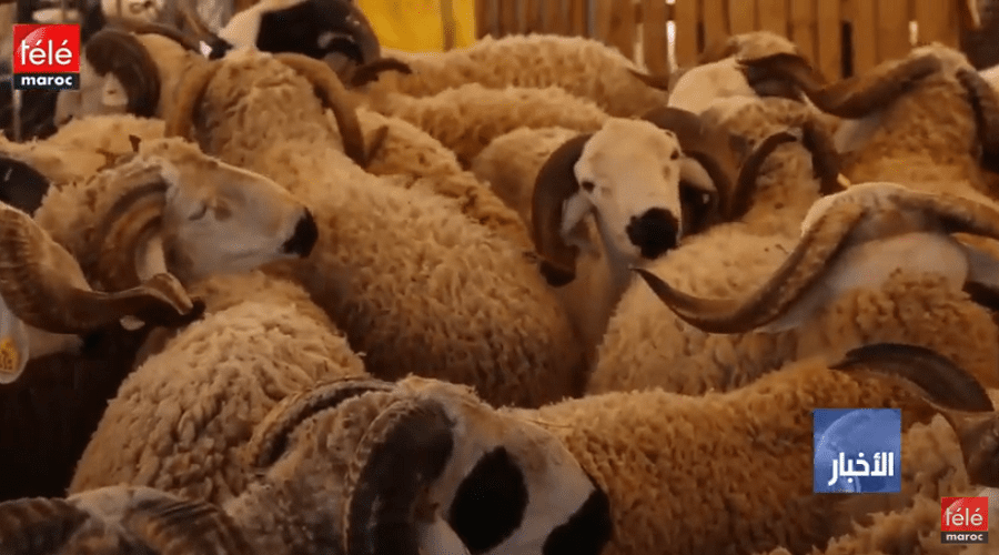 """عيد الأضحى 2019: """"أونسا"""" ترقم ستة ملايين رأس من الأضاحي وتعد 30 سوقا إضافيا للأغنام والماعز"""