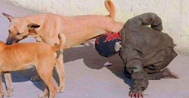وزارة الداخلية.. هذه حقيقة صورة لشخص يحاول شرب الحليب من ثدي كلبة ضالة
