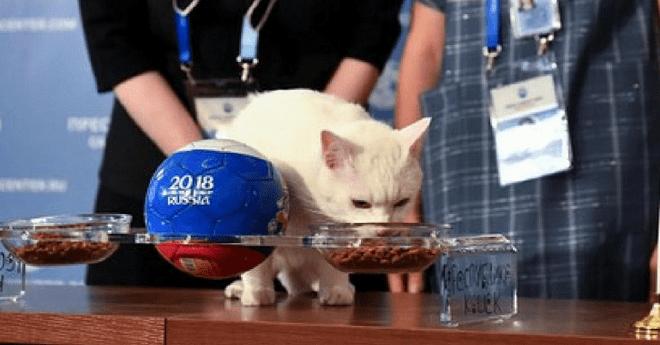 """فيديو .. القط """"آخيل"""" يصدم ميسي قبل مباراة نيجيريا"""