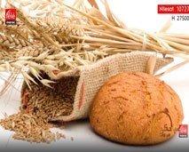 خبز القمح الكامل.. أنواعه وفوائده